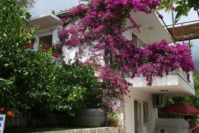 Отель Irena Villa 2* Бечичи Черногория